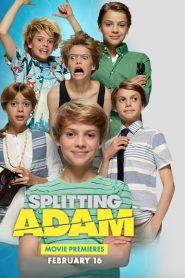 Splitting Adam 2016