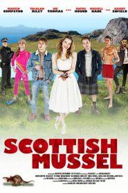 Scottish Mussel 2015