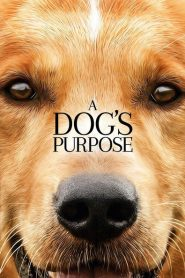 A Dog's Purpose 2017