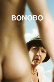 Bonobo 2014