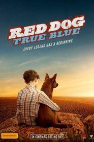 Red Dog: True Blue 2016